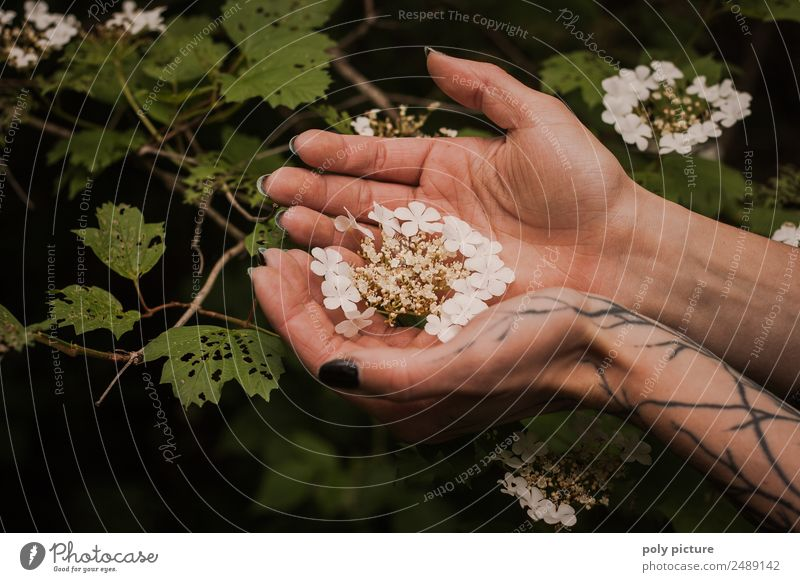 [AM106] - Hand of a tattooed young lady holding flowers Young woman Youth (Young adults) Adults Life Fingers 13 - 18 years 18 - 30 years 30 - 45 years