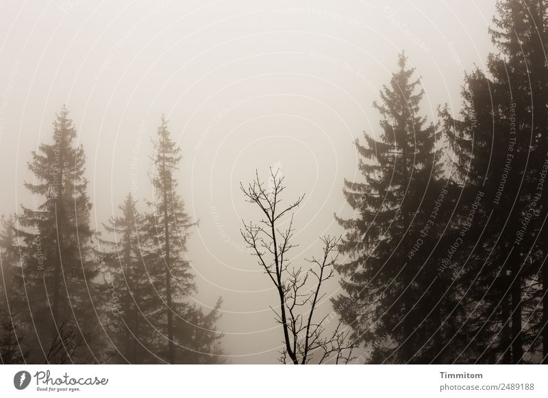 Thriller environment Environment Nature Landscape Plant Sky Bad weather Fog Tree Forest Sadness Dark Brown Fear Crime thriller Sepia colour Subdued colour