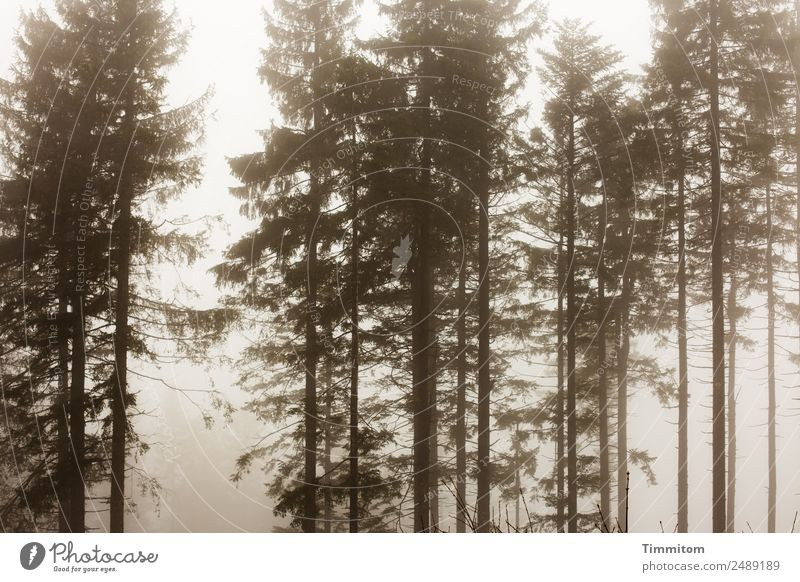 atmospheric picture Environment Nature Landscape Plant Sky Autumn Winter Weather Fog Tree Forest Dark Natural Emotions Black Forest Sadness Moody Ambience