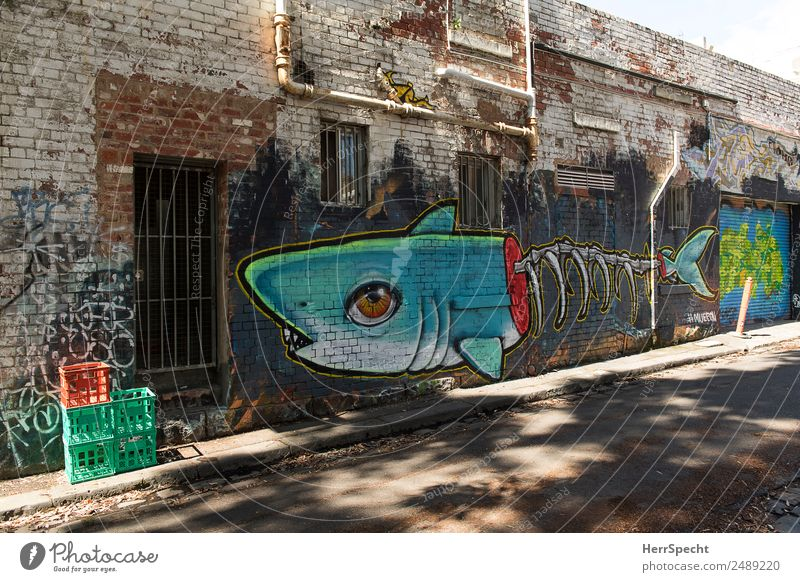 Fish Alley House (Residential Structure) Manmade structures Building Wall (barrier) Wall (building) Door Shark 1 Animal Graffiti Esthetic Exceptional Large