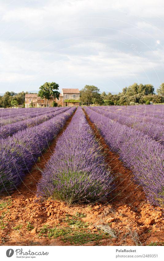 #A# Purple Farm Art Esthetic Violet Lavender Lavender field Lavande harvest Large-scale holdings France Provence Colour photo Multicoloured Exterior shot
