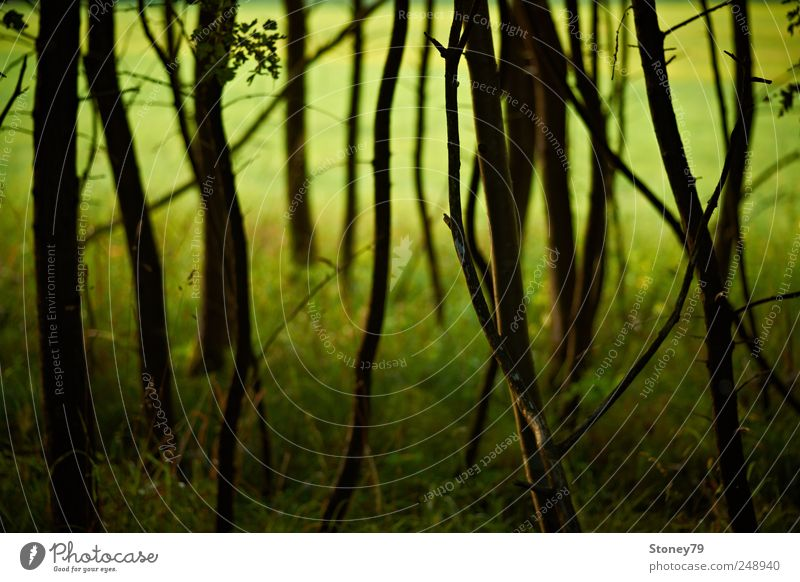 edge of the forest Nature Landscape Summer Beautiful weather Tree Grass Meadow Forest Edge of the forest Green Calm Chaos Mysterious Serene Colour photo