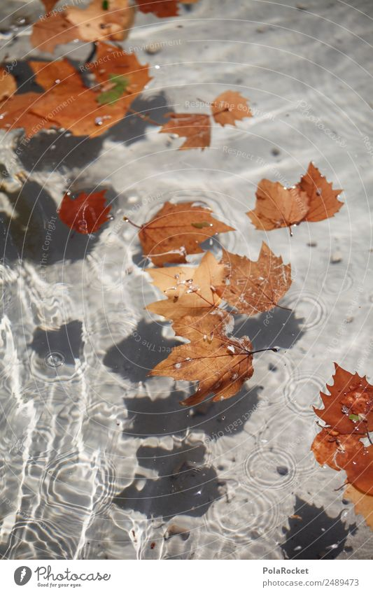Water Leaf Environment Autumn Brown Esthetic Autumn leaves Autumnal Surface of water Autumnal colours Early fall Autumnal weather To leaf (through a book)
