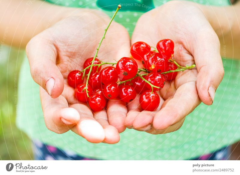 Children's hand holding currants Infancy Youth (Young adults) Life Hand Fingers 3 - 8 years 8 - 13 years Environment Nature Plant Spring Summer Garden Park Joy