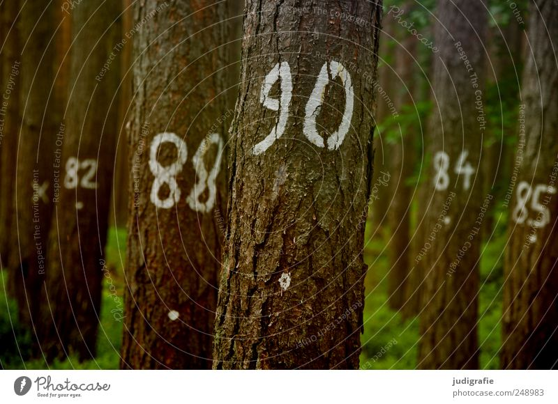 tree counting Environment Nature Landscape Plant Tree Forest Sign Digits and numbers Natural 82 88 90 84 85 Tree bark Statistics Numbers Colour photo