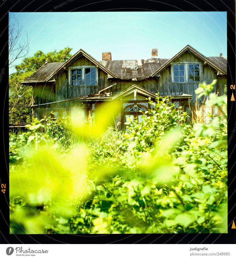 Nature Old Plant Summer House (Residential Structure) Environment Landscape Garden Building Moody Broken Bushes Change Transience Manmade structures Historic