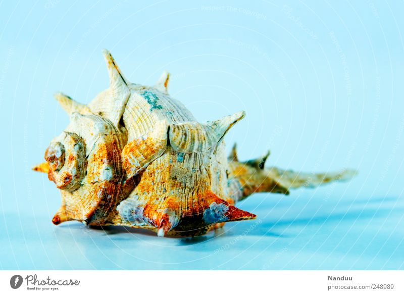 Summer Vacation & Travel Animal Esthetic Flotsam and jetsam Vacation mood Sea snails Mussel shell
