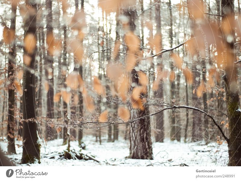 Nature Tree Leaf Winter Calm Forest Cold Snow Environment Brown Orange Ice Power Frost Tree trunk Snowscape