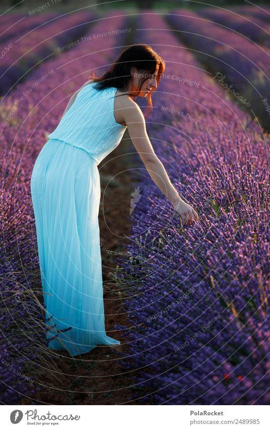 #A# Lavender Light Environment Nature Landscape Plant Esthetic Kitsch Idyll Violet Dress Woman Girl Girlish Romance Lavender field Lavande harvest Blossoming