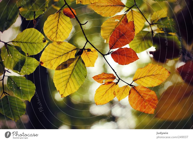 Sky Nature Old Green Tree Plant Leaf Forest Yellow Colour Life Autumn Environment Brown Natural Growth