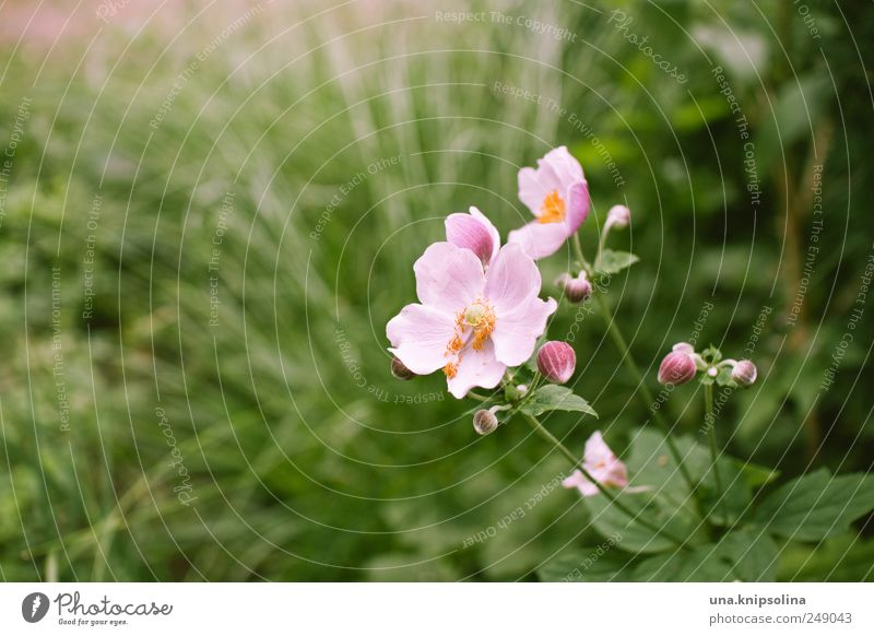 of all good flowers are three. Nature Plant Grass Leaf Blossom Foliage plant Wild rose Park Meadow Blossoming Fragrance Fresh Natural Positive Beautiful Green