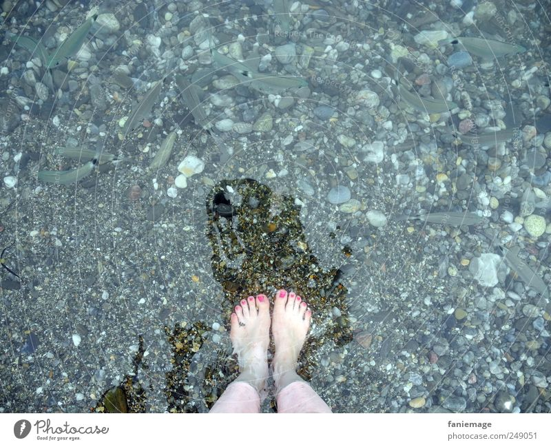 Les orteils roses Water Ocean Fish Nail polish Pink Blue Legs Animal foot toes Fishing (Angle) Shadow Brave Brash Cold Summer collioure France Vacation & Travel