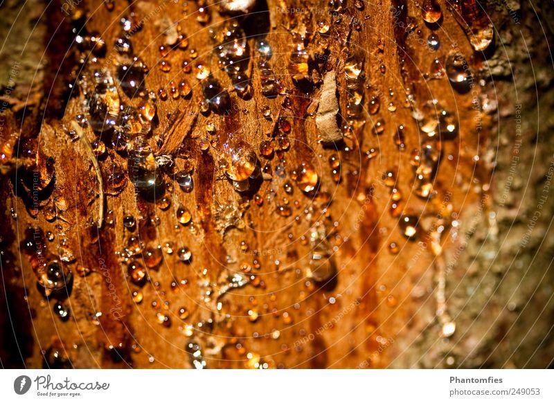 Nature Tree Summer Tree bark Slimy