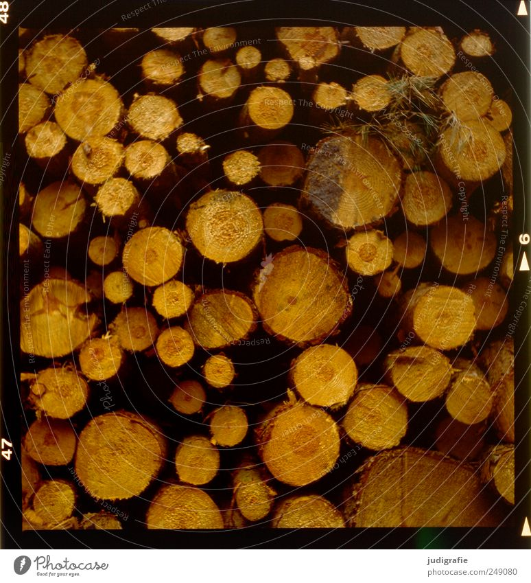 wood Agriculture Forestry Environment Nature Landscape Tree Wood Lie Firewood Annual ring Round Stack Many Colour photo Exterior shot Light