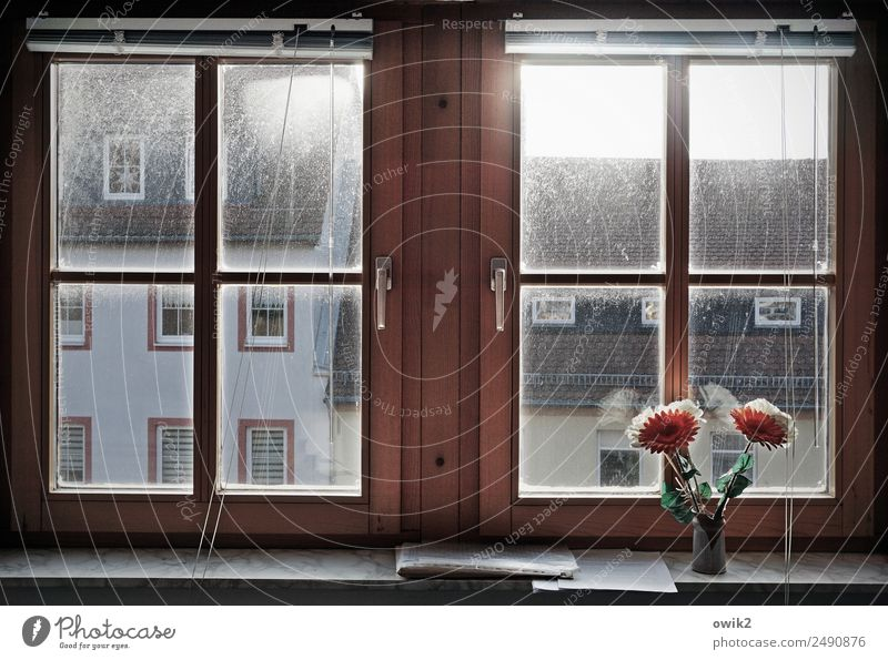 Limited view Small Town House (Residential Structure) Building Wall (barrier) Wall (building) Facade Window Roof Window frame Artificial flowers Flower vase