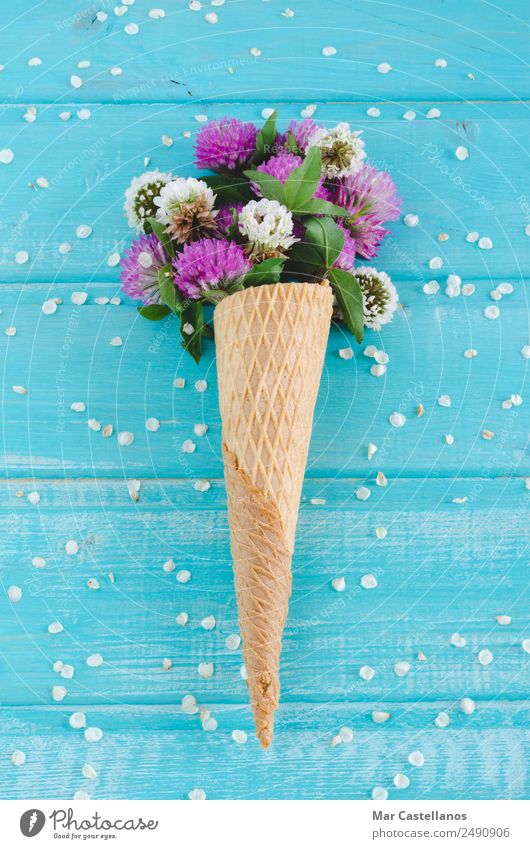 Bouquet of clover flowers in cornet on blue wooden background Summer Blue Plant Beautiful Colour Green White Flower Leaf Spring Blossom Natural Meadow Grass Art