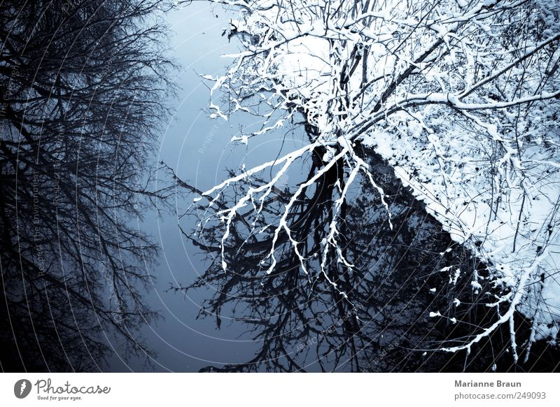 Winter in ... Nature Water Sky Ice Frost Snow Tree Forest River bank Brook Looking Cold Black White Moody Beautiful Beautiful weather Reflection Bushes