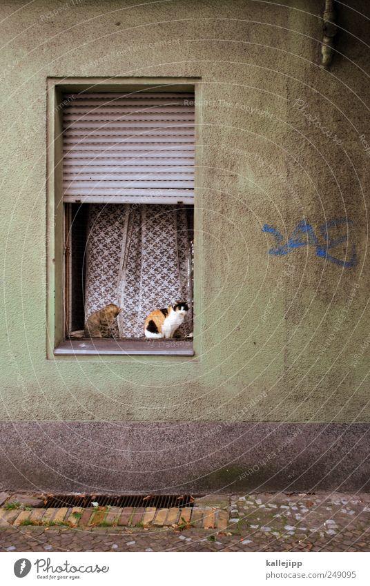 House (Residential Structure) Animal Window Cat 2 Flat (apartment) Sit Open Living or residing Sidewalk Drape Pet Venetian blinds Window board Roller shutter