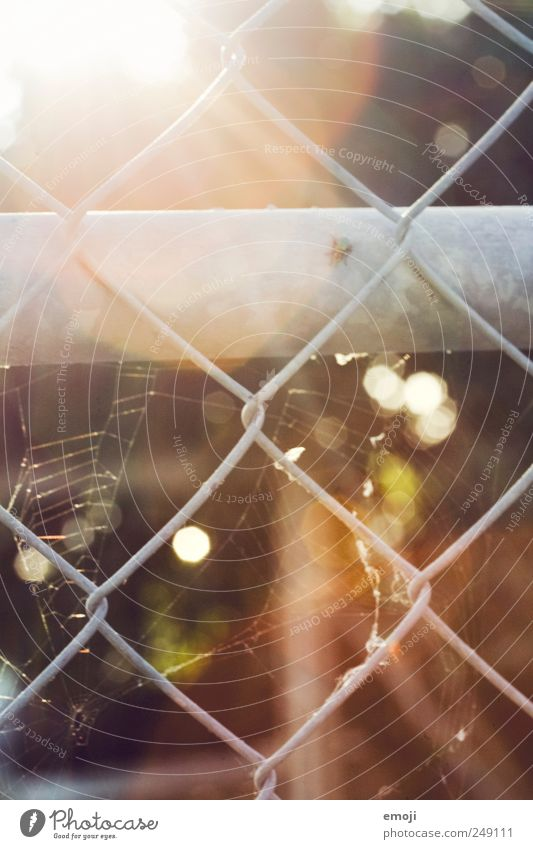 girl's prison Sun Warmth Grating Mesh grid Wire mesh Wire fence Fence Spider's web Prismatic colors Colour photo Exterior shot Deserted Day Light Sunlight