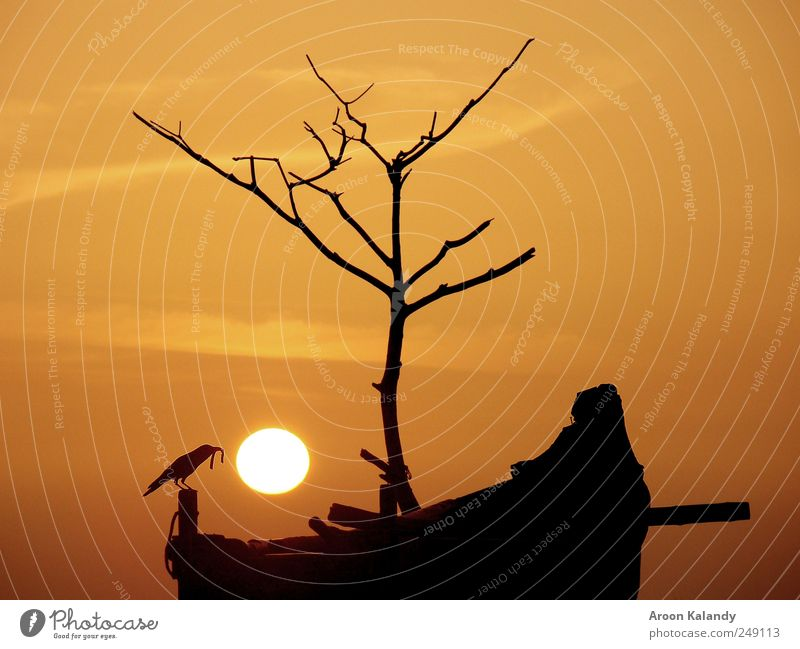 Sunset silhouette Harmonious Well-being Relaxation Calm Summer Nature Sky Clouds Sunrise Sunlight Beautiful weather Coast Small Town Fishing boat Dinghy Bird 1