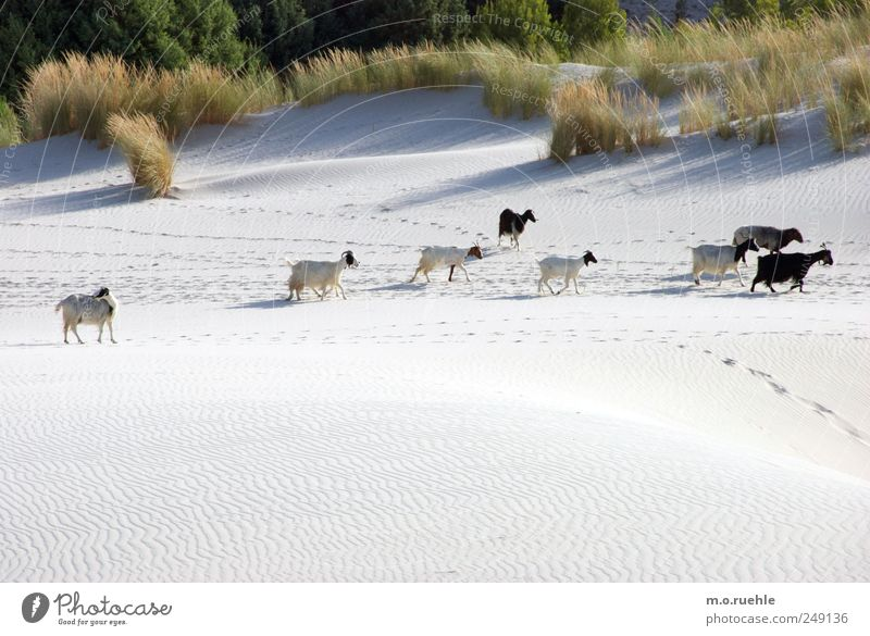 Nature Beach Environment Landscape Grass Sand Coast Moody Going Island Free Wild Authentic Group of animals Cute Friendliness