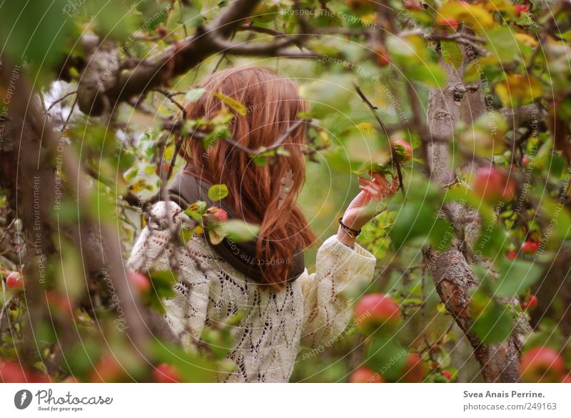 apple time. Young woman Youth (Young adults) Hair and hairstyles 1 Human being 13 - 18 years Child Environment Nature Autumn Tree Apple tree Garden Park Sweater