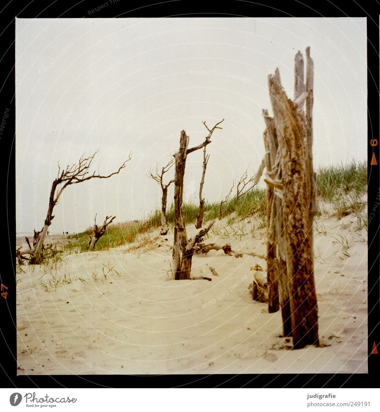 western beach Environment Nature Landscape Plant Sand Tree Grass Coast Beach Baltic Sea Darss Western Beach To dry up Growth Natural Moody Death Transience