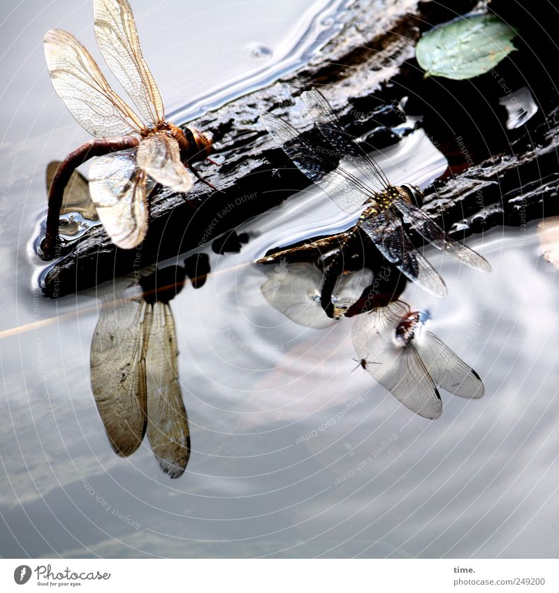 Sky Nature Water Leaf Animal Environment Wood Flying Lake Waves Sit Wing Trip Drinking Insect Sunbathing