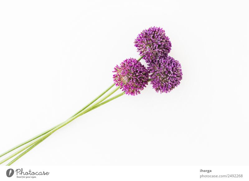 Allium isolated on white background Vegetable Herbs and spices Beautiful Feasts & Celebrations Valentine's Day Mother's Day Nature Plant Flower Love Growth