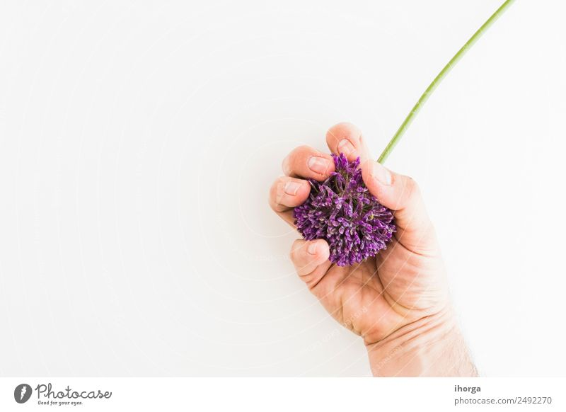 Allium isolated on white background Vegetable Herbs and spices Elegant Beautiful Garden Feasts & Celebrations Valentine's Day Mother's Day Human being Hand