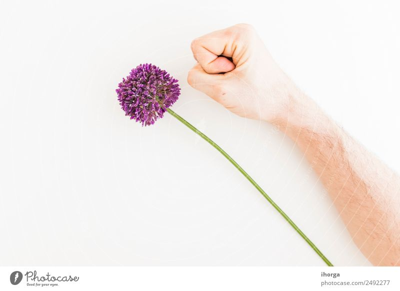 Allium isolated on white background Vegetable Herbs and spices Elegant Summer Garden Feasts & Celebrations Valentine's Day Mother's Day Human being Hand Fingers