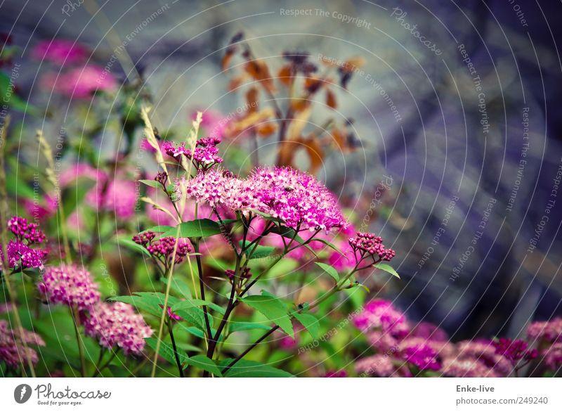 Nature Plant Flower Colour Meadow Emotions Blossom Moody Elegant Esthetic Bushes Uniqueness Idyll Serene Joie de vivre (Vitality) Ease