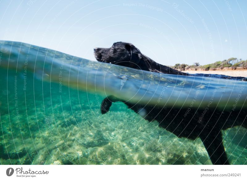 Dog Nature Water Ocean Joy Animal Black Relaxation Movement Happy Swimming & Bathing Walking Natural Exceptional Authentic Cute
