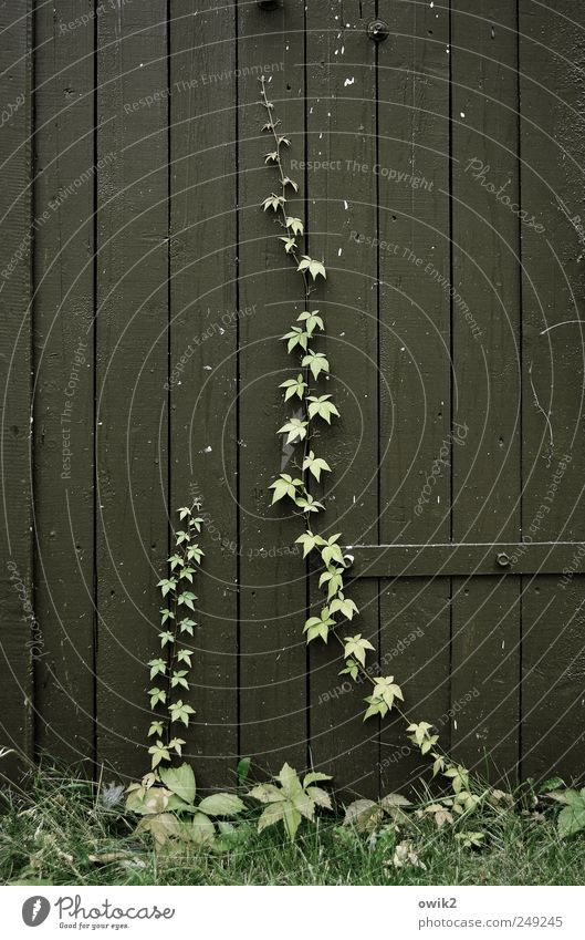 Nature Green Plant Summer Leaf Black Environment Grass Gray Wood Power Door Tall Growth Natural Bushes