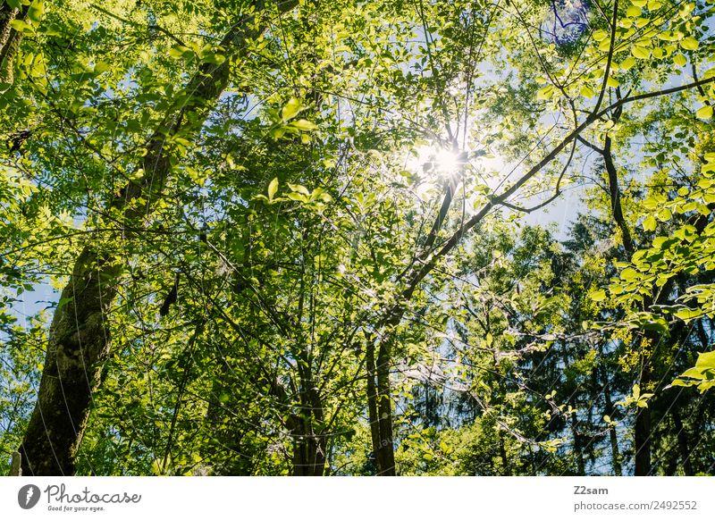 Summer | Sun | Forest Environment Nature Landscape Sunlight Beautiful weather Tree Illuminate Fresh Natural Warmth Green Warm-heartedness Idyll Sustainability