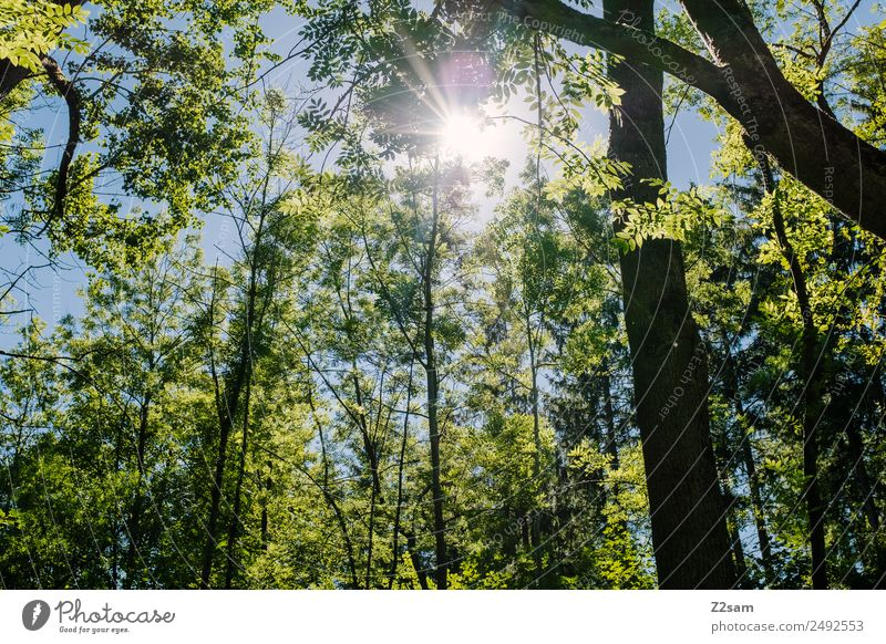Sun Summer Forest Trip Environment Nature Landscape Sunlight Climate Climate change Weather Beautiful weather Tree Bushes Glittering Illuminate Fresh Natural