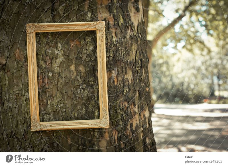 tree picture Tree Park Hang Exceptional Funny Picture frame Image Tree trunk Royal Noble Frame Empty Tree bark Forget Gold Doomed Colour photo Subdued colour