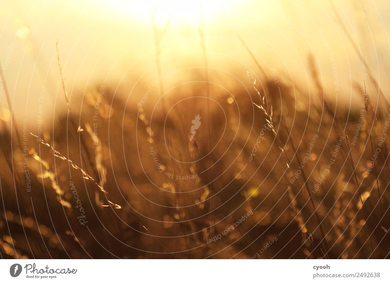 Nature Summer Landscape Relaxation Calm Warmth Meadow Grass Happy Time Moody Contentment Illuminate Field Gold Idyll