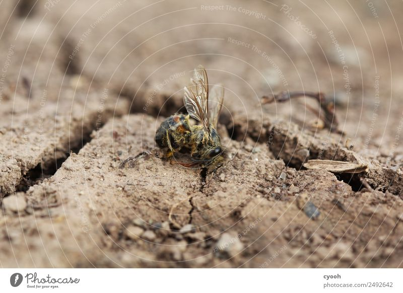 Future? Earth Dead animal Bee Concern Grief Death Appetite Thirst Guilty Shame Fear Dangerous Threat Risk Anger Time Destruction bee deaths Fear of the future