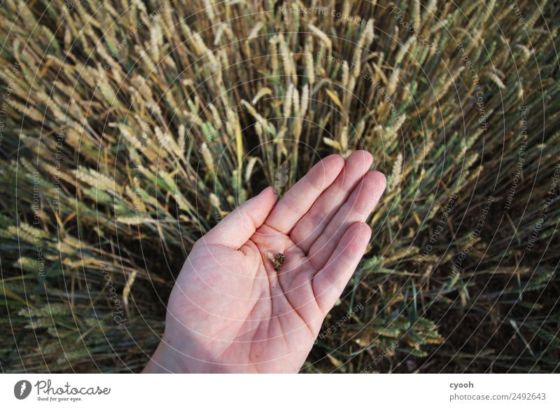 Hand Sadness Time Death Fear Field Future Dangerous Threat Agriculture Fear of the future Anger Illness Organic produce Pain Bee