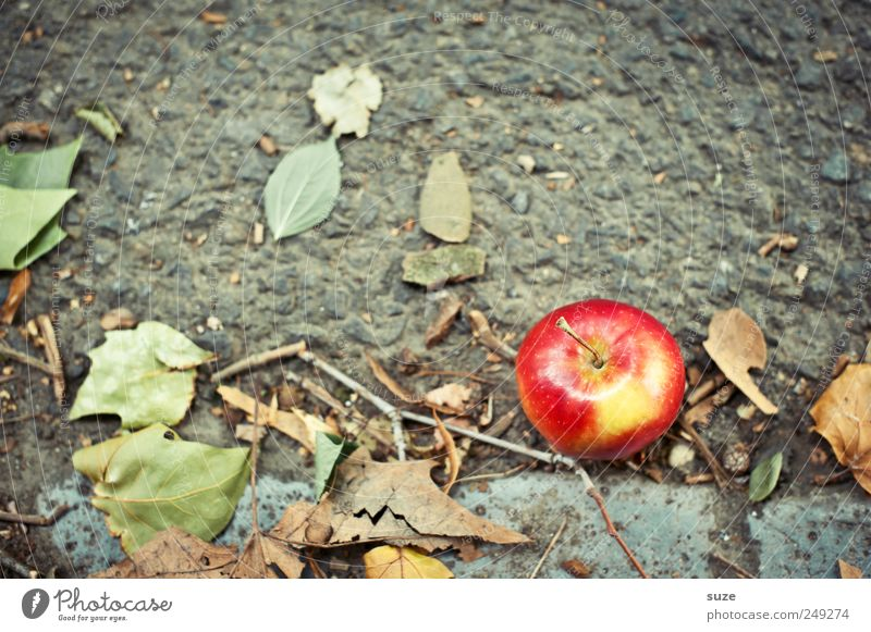 Green Red Nutrition Autumn Lanes & trails Food Fruit Lie Sweet Natural Authentic Apple Friendliness Harvest Healthy Eating Paradise