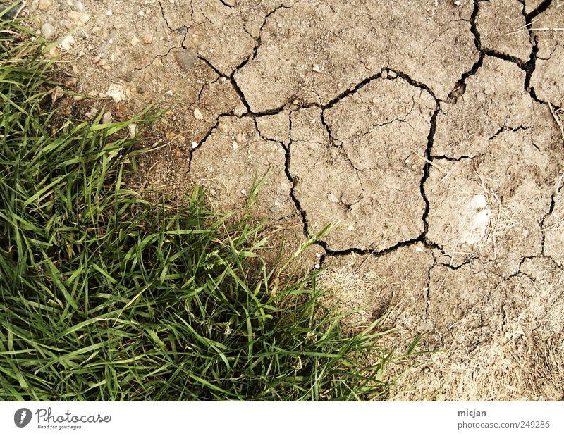 Nature Green Meadow Grass Brown Field Earth Desert Dry Border Crack & Rip & Tear Converse Steppe
