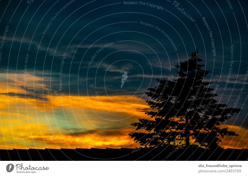 Dramatic sunset Nature Landscape Plant Sky Clouds Storm clouds Sunrise Sunset Sunlight Summer Beautiful weather Bad weather Tree Coniferous trees Berlin Germany