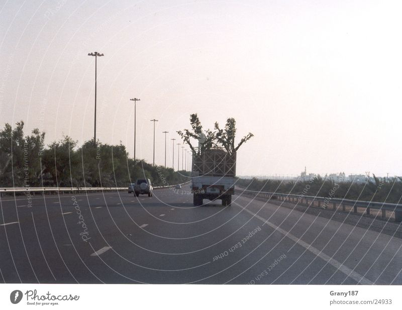 tree thieves Tree Truck Highway Palm tree Advertising executive Poster Panorama (View) Vacation & Travel emirates advertising material billboard advertising TV