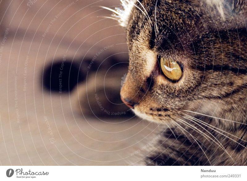 pussycat Animal Pet Cat 1 Cute Lie Meditative Profile Colour photo Copy Space left Animal portrait Looking away