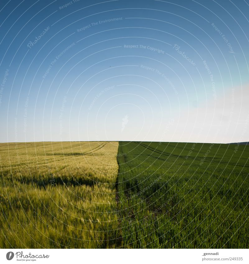 Sky Nature Blue Plant Summer Calm Loneliness Yellow Environment Landscape Grass Earth Line Earth Field Horizon