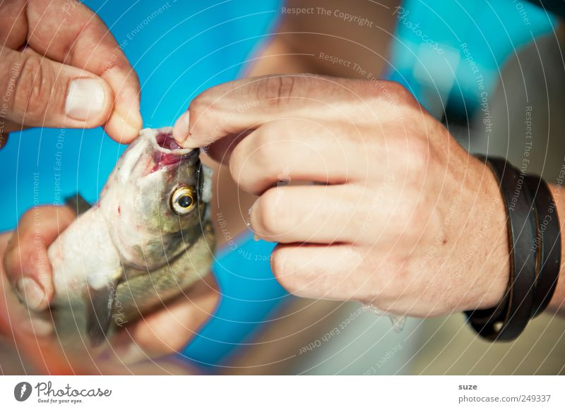 freshly caught Fish Leisure and hobbies Fishing (Angle) Hand Fingers Animal Wild animal 1 To hold on Blue Angler Fishing line Fishery Fish mouth Liberate