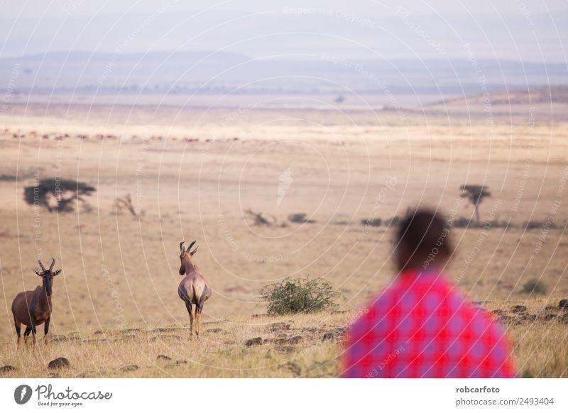 Maasai walking in the savannah at sunset Lifestyle Beautiful Vacation & Travel Summer Sun Human being Woman Adults Man Nature Landscape Tree Grass Village