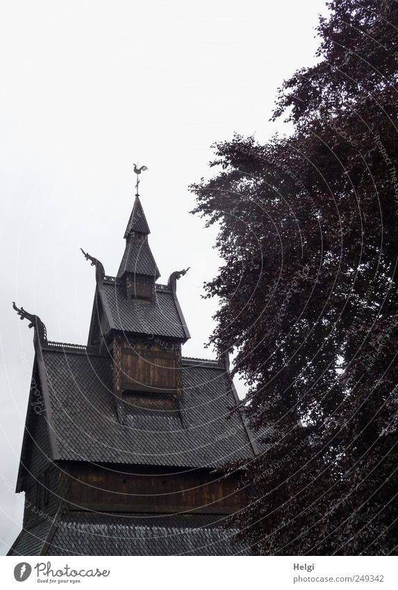 historic... Vacation & Travel Tourism Sightseeing Art Work of art Plant Bad weather Tree Leaf Copper beech Norway Church Manmade structures Stave church Roof