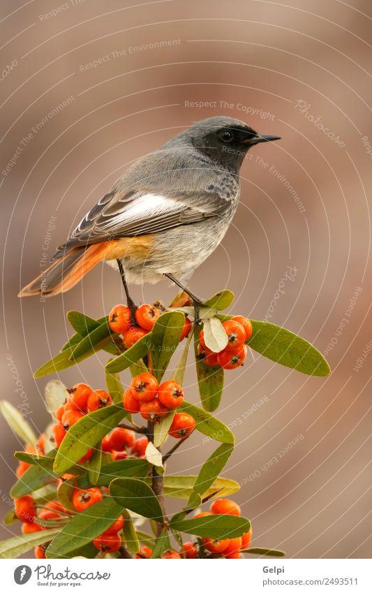 bird Nature Man Beautiful White Animal Dark Black Adults Life Environment Autumn Natural Small Bird Brown Wild